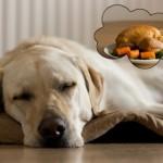 Dog dreaming of turkey